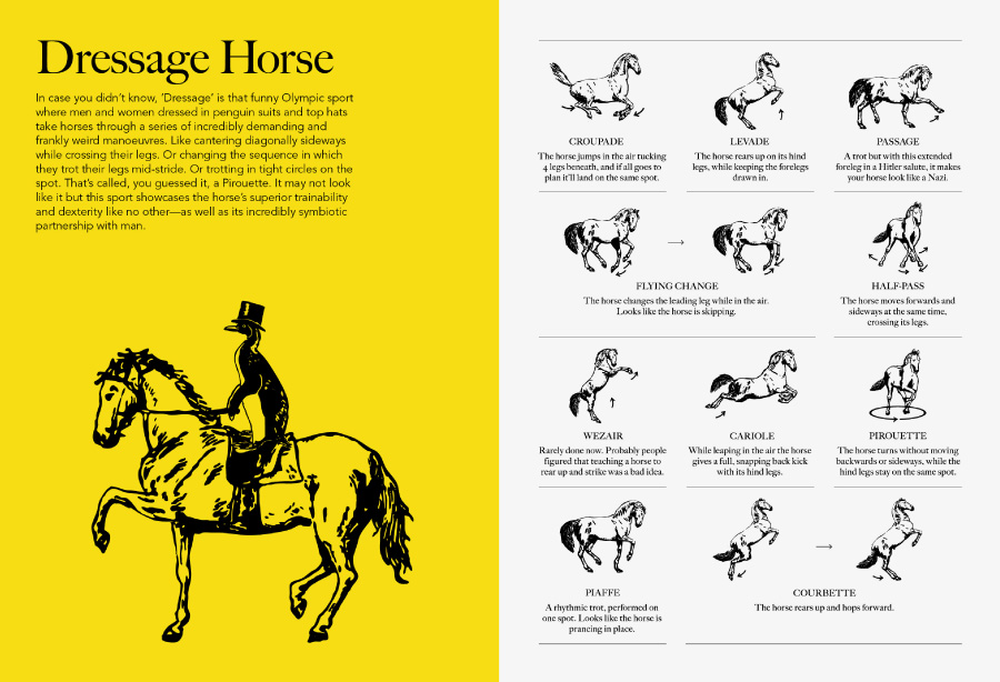horse tales article img3