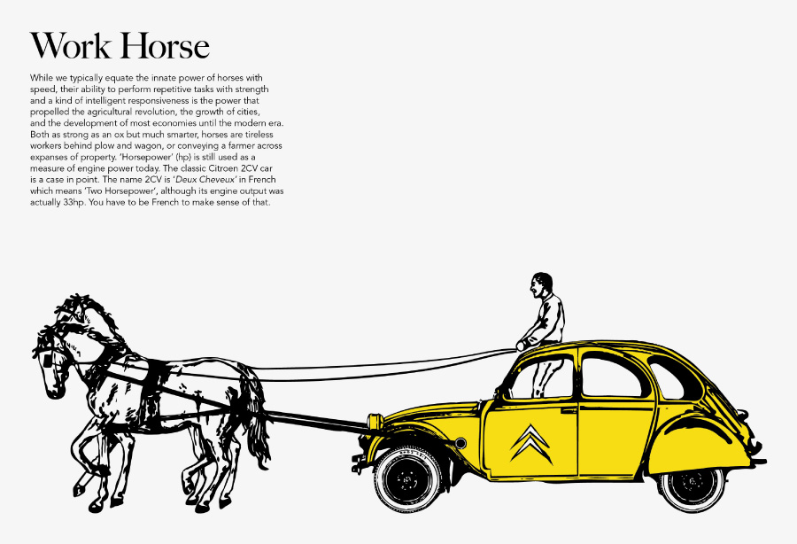 horse tales article img6
