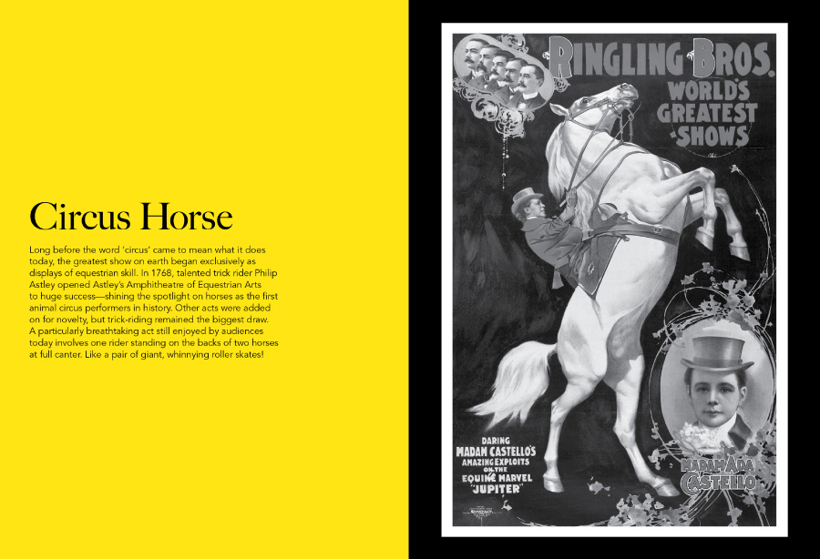horse tales article img7